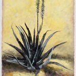 Aloe Still Life