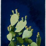 Prickly Pear with Blue