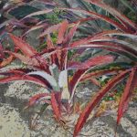 Mexico Garden  60 x 72