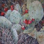 Prickly Pear and Grasses